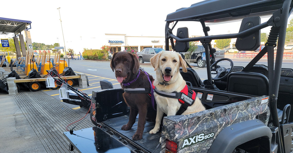 Neko and Bo at Lowes enjoying the ATV