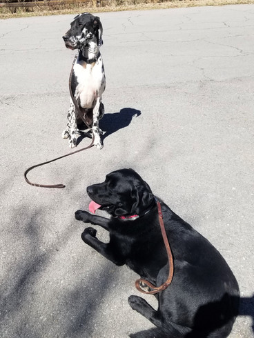 Murphy and Morgan