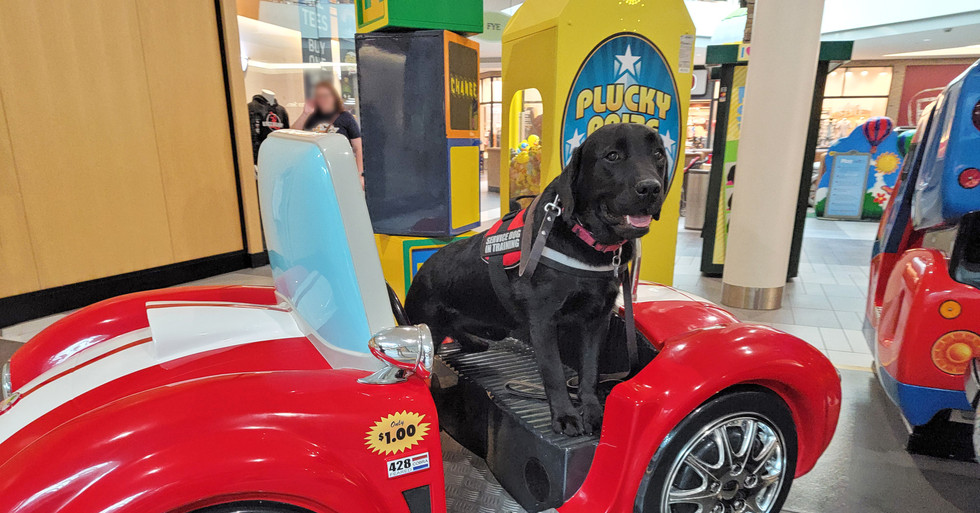 Rogan trying out a car ride at Cool Springs Mall