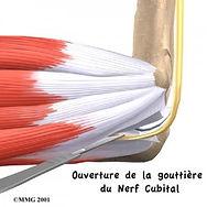 Nerf cubital