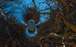 Curly Willow Vortex 11