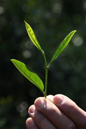 茶禅草堂の思い