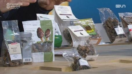 Blog suisse morille swiss import - Cuisiner les morilles sechees ...