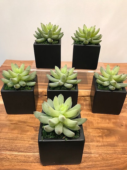 Succulent in Black Cube
