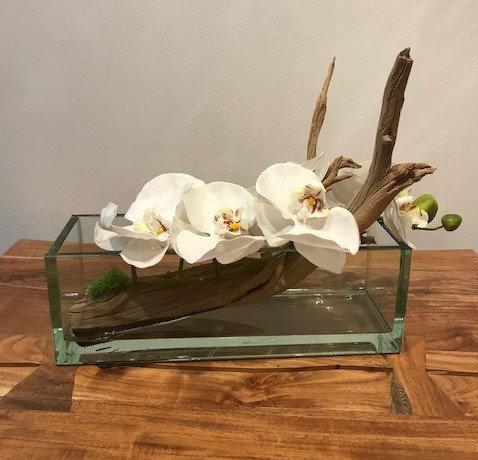 White Phalaenopsis Ghost Wood