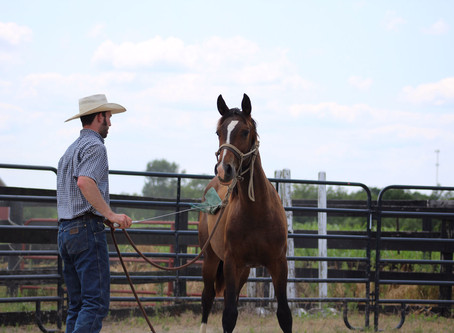Becoming Versatile and Fluent Communicators for Our Horses