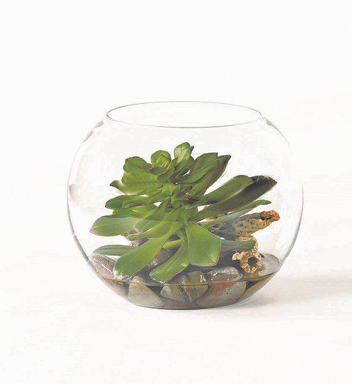 Medium Succulent  Terrarium