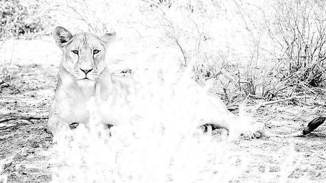 The Royal from Monochrome Kingdom by Tahmineh Khajotia Photography