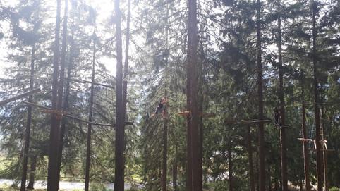 zwischen den Bäumen