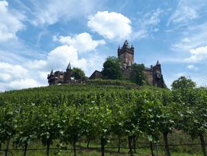 Weinberge umrunden die Burg