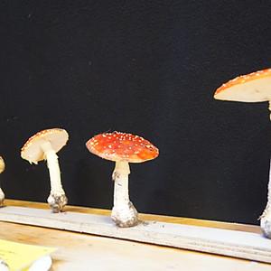 Dîner champignons