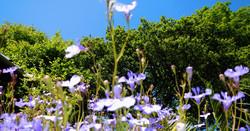 pembrokeshire_cottage_flowers(5)