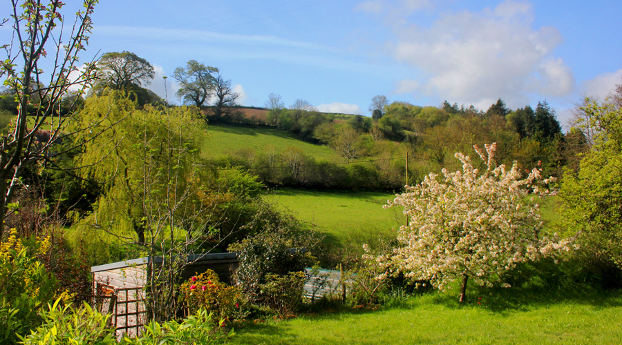 spring_in_the_teifi_valley