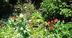 pembrokeshire_cottage_flowers(1)