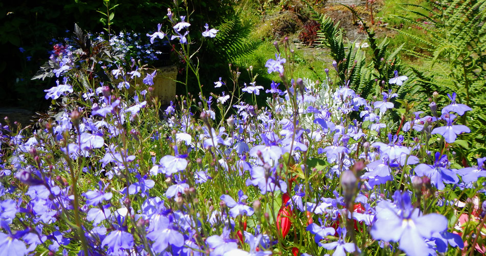 pembrokeshire_cottage_flowers(6)