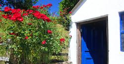 pembrokeshire_cottage_flowers(12)