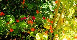 pembrokeshire_cottage_flowers(10)