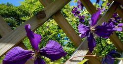 pembrokeshire_cottage_flowers(4)