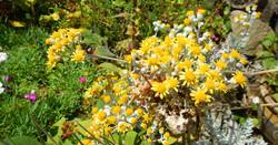 pembrokeshire_cottage_flowers(11)