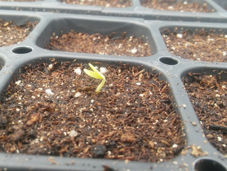 Seeds are Sprouting!