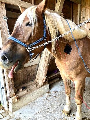 Elektrotherapie Pferd
