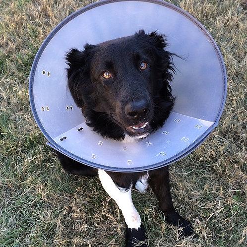 """""""Erste-Hilfe-Kurs am Hund"""" am Sa 25.4.2020 von 14 bis 16 Uhr"""