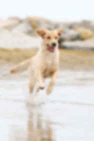 Aktiver Hund