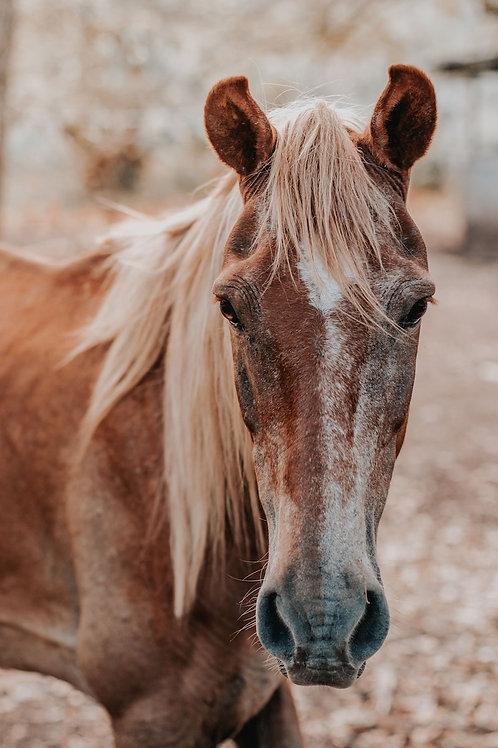 """""""Das geriatrische Pferd"""" (Termin Ihrer Wahl)"""