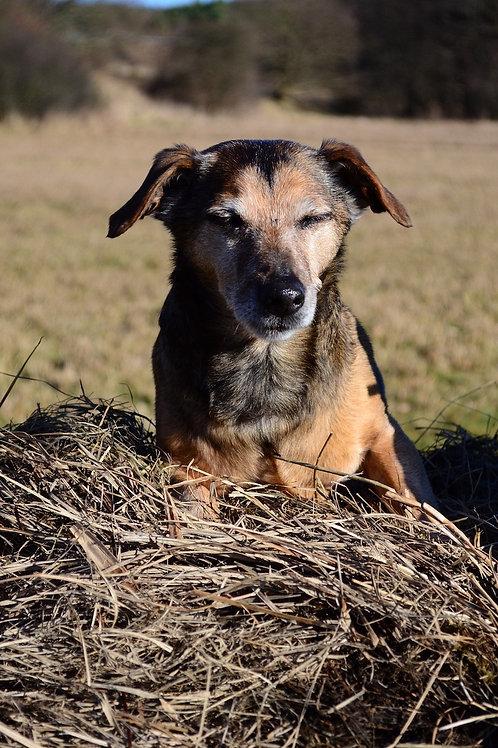 """""""Der geriatrische Hund"""" am Do 24.9.2020 von 18:30 bis 20:30 Uhr"""