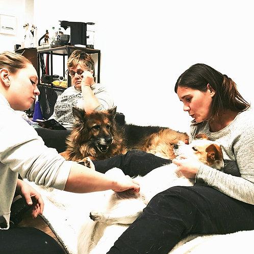 """""""Massagekurs für Hunde"""" am Mi 13.5.2020 von 18:30 bis 21 Uhr."""
