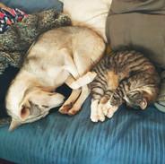 koira_kissa_lumo_franklin_valkoinen_kukk