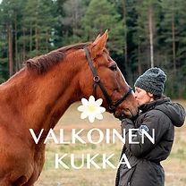 VK hevoset.jpg