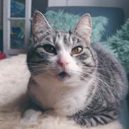 kissa_franklin_valkoinen_kukka.jpg