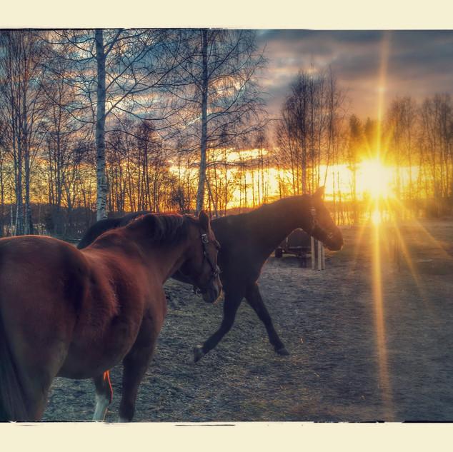 hevonen_dolli_dior_tallipiha_kevät_valk