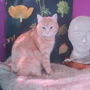 kissa_dani_valkoinen_kukka.jpg