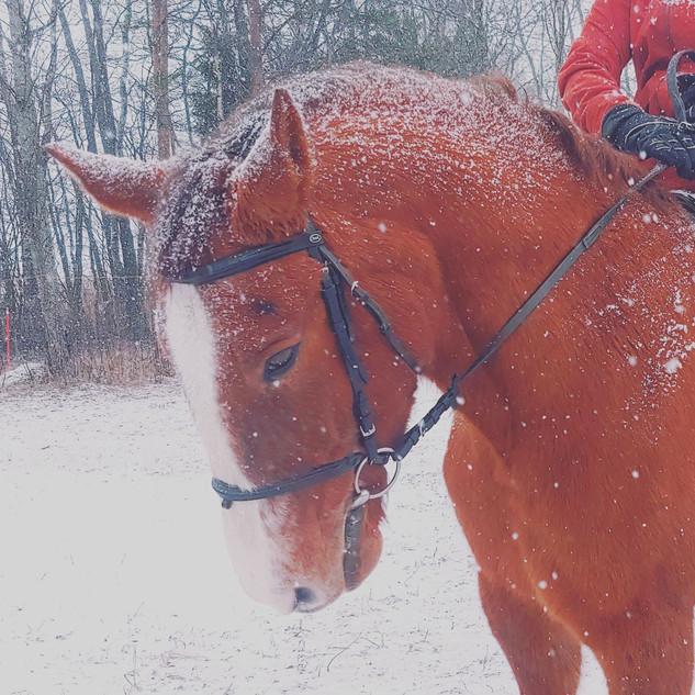 hevonen_dolli_talvi_ratsastus_valkoinen_