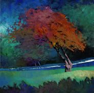 TREE BY A LIT PATH
