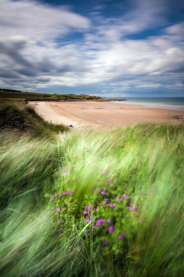 Sand Dunes, Northumberland, England.jpg
