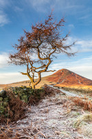 Roseberry Topping, Early, Morning, Frost