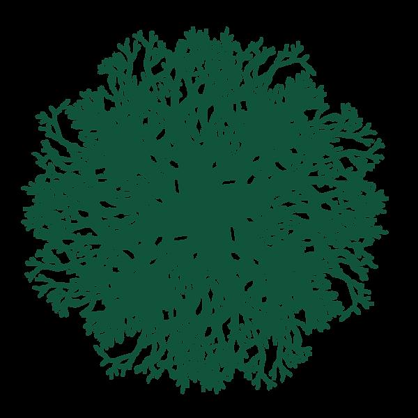Turned native logo 03.png