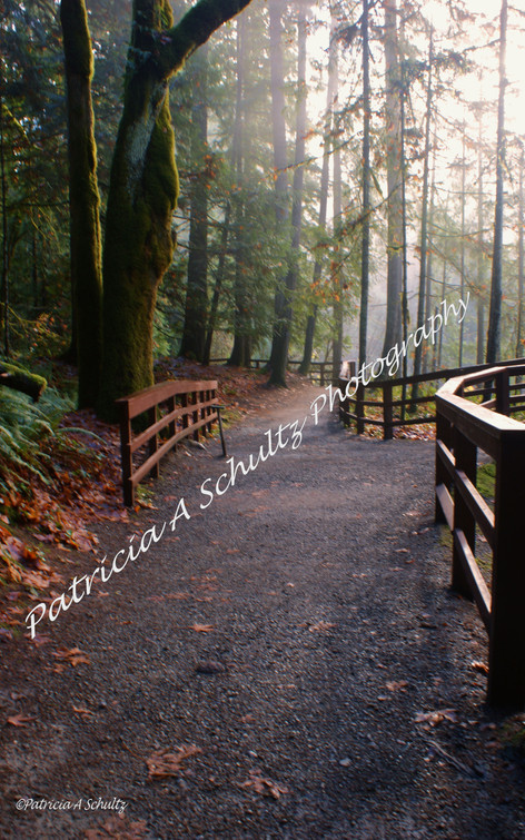 Path to Englishman River Falls