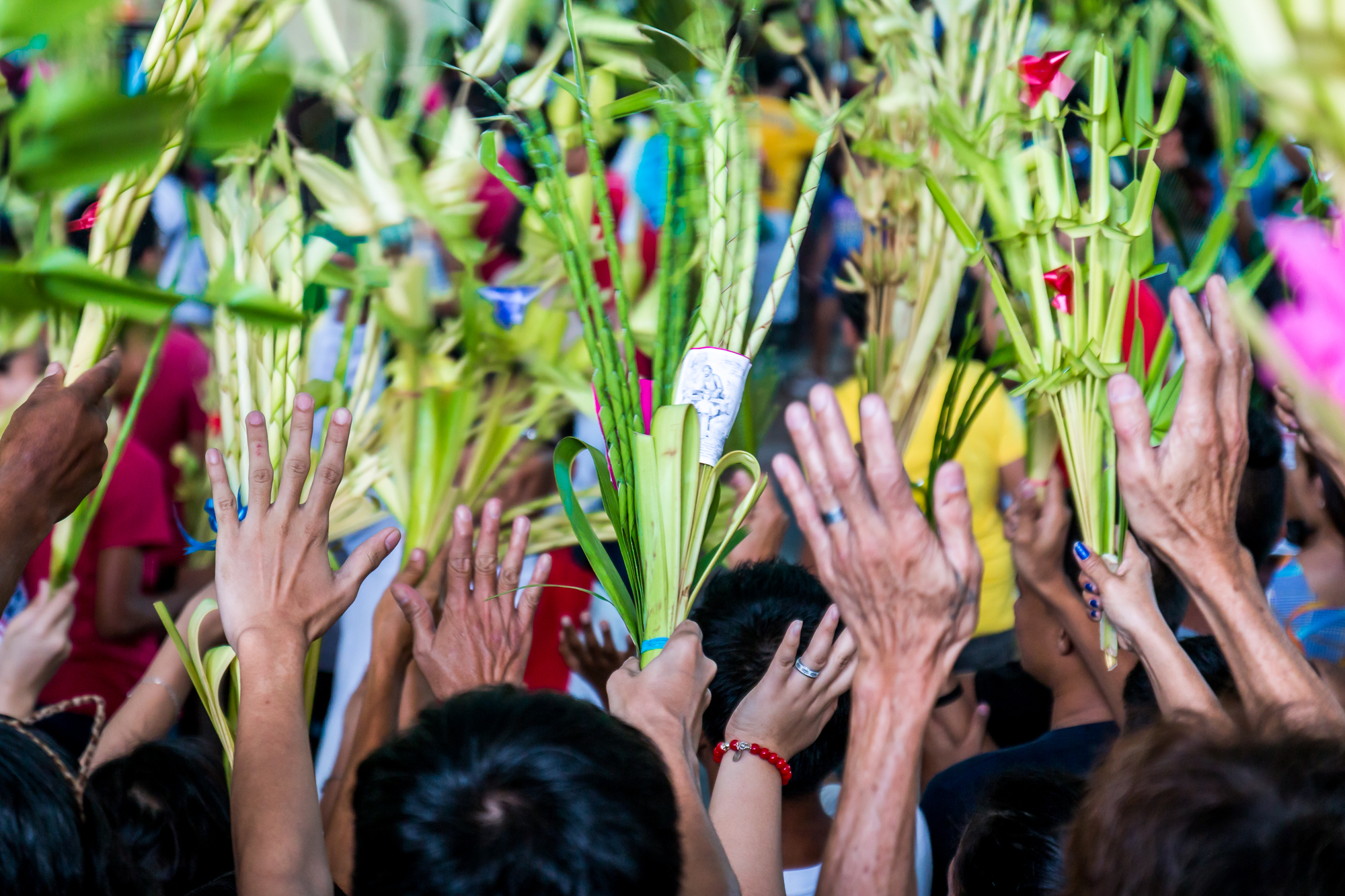 Colors of Faith - Palm Sunday