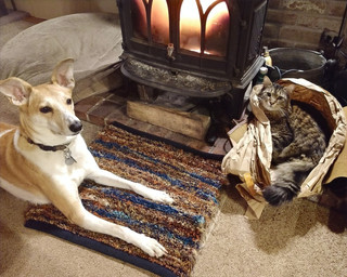 """""""It's MY rug. The cat can have the bag."""" -Luke the dog"""