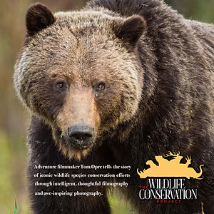 Grizzly Bear Project