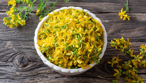St. John's Wort - A Must for your Herbal Medicine Cabinet