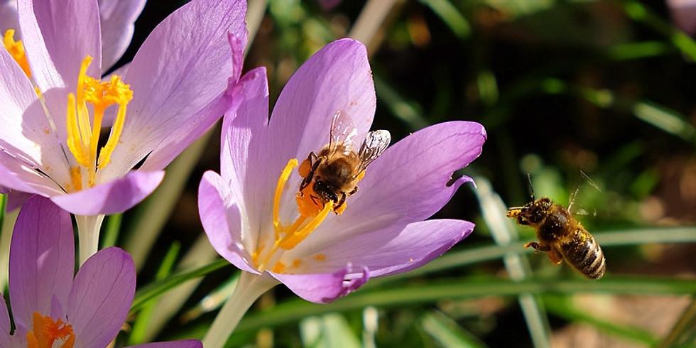 Bucks County Beekeepers seminar