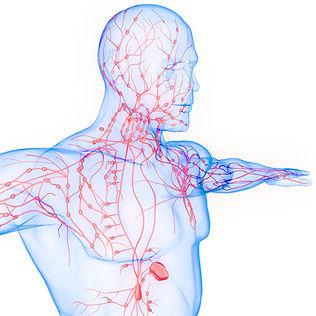 lymph system.jpg