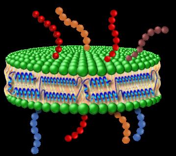 NanoDisc.png