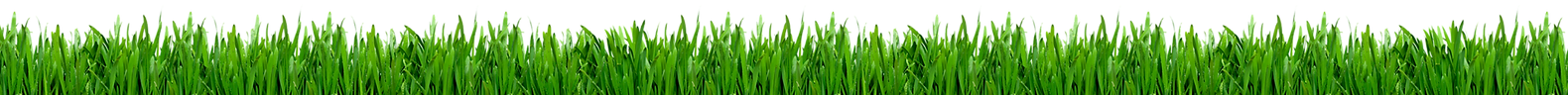 grass3_edited_edited_edited.png