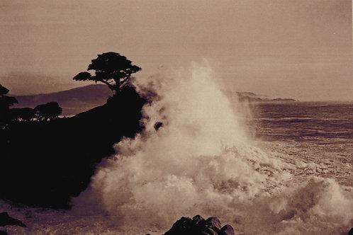 Lone Cypress 1916